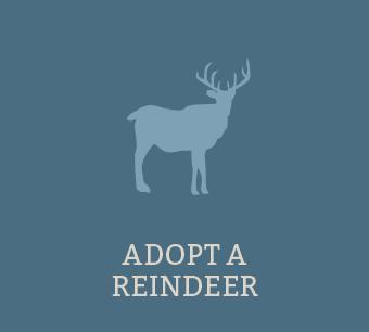Adopt a Reindeer