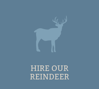 Hire our Reindeer